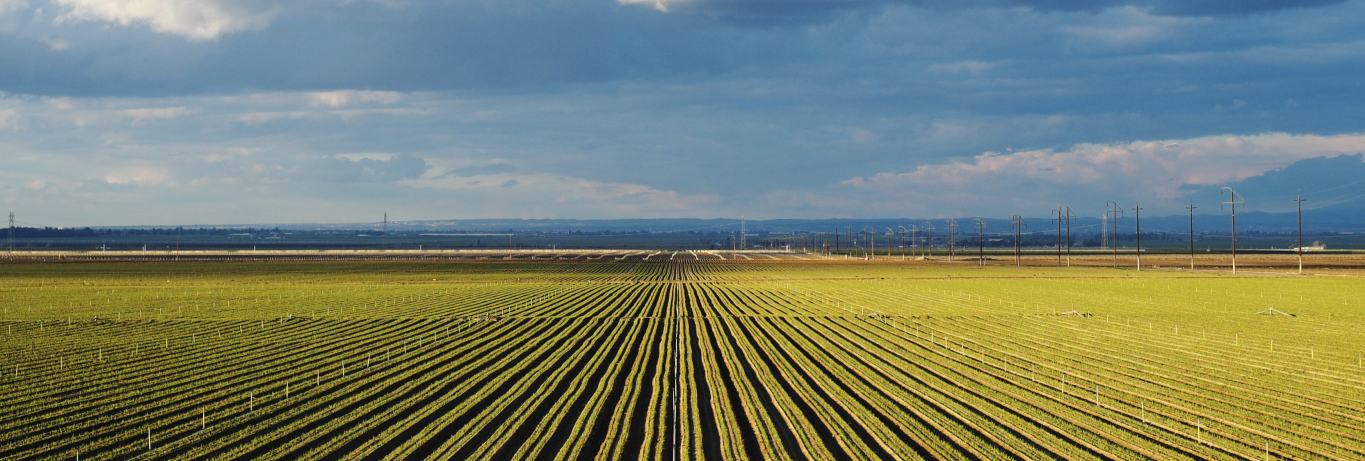 New White Paper: Large-Scale Solar and Agricultural Land